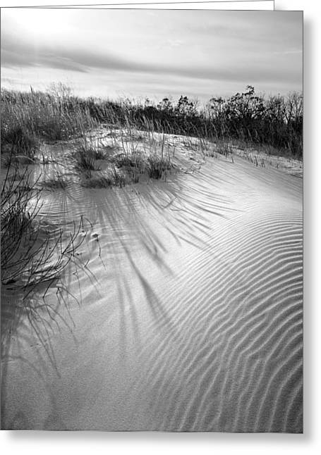 Indiana Dunes Greeting Cards - Dune Ripple Greeting Card by James Rasmusson