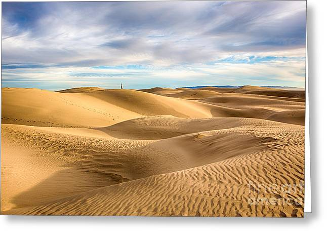 Sand Patterns Greeting Cards - Dune Sentinel  Greeting Card by Mimi Ditchie