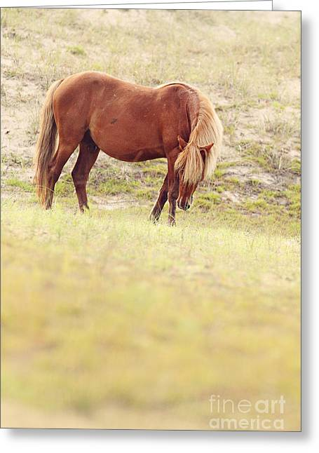 Equine Photo Greeting Cards - Dune Stallion Greeting Card by Lyndsey Warren