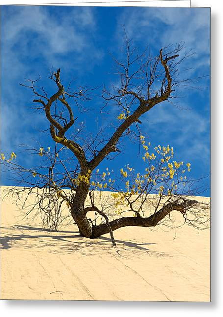 Indiana Dunes Greeting Cards - Dune Tree Greeting Card by Sean Buchanan