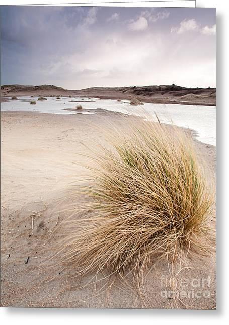 Limburg Greeting Cards - Dune Wetlands Under Winter Sky Greeting Card by David Hanlon