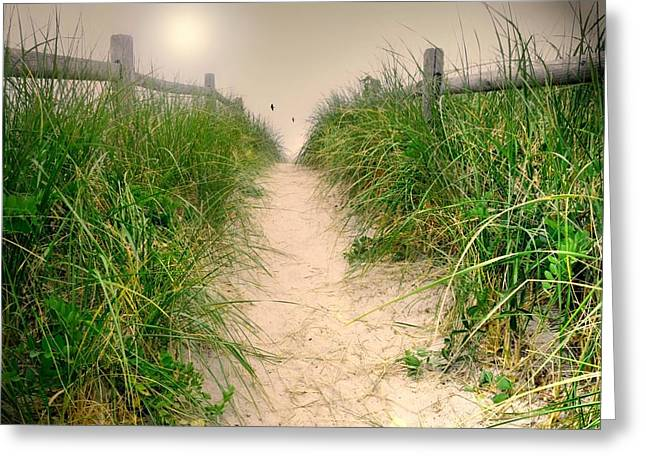 Dunes Catch Light Greeting Card by Diana Angstadt