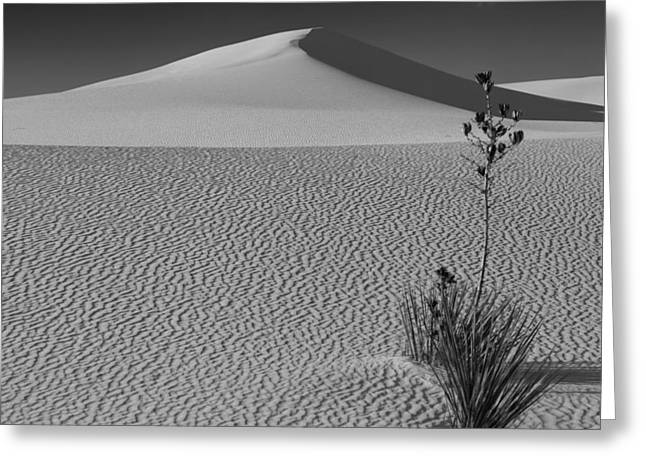 White Photographs Greeting Cards - Dunescape Greeting Card by Joy Johnson
