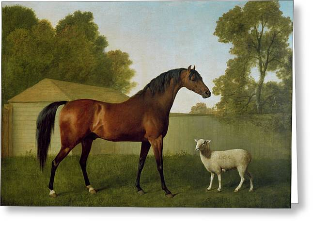 Halifax Greeting Cards - Dungannon, The Property Of Colonel Okelly, Painted In A Paddock With A Sheep, 1793 Greeting Card by George Stubbs