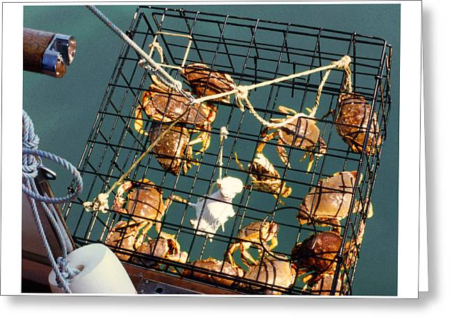 Puget Sound Photographs Greeting Cards - Dungeness crabs by the dozen  in one pull Greeting Card by Jack Pumphrey