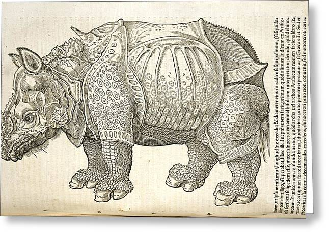 One Horned Rhino Greeting Cards - Durers Rhinoceros, 16th Century Greeting Card by Natural History Museum, London