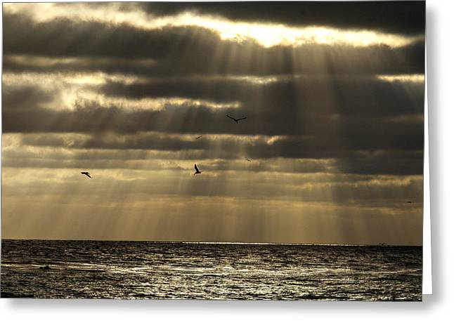 Joe Schofield Greeting Cards - Dusk on Pacific Greeting Card by Joe Schofield