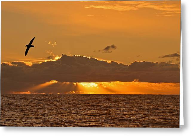 The Sun God Greeting Cards - Dusk on the Drake Passage Greeting Card by Tony Beck