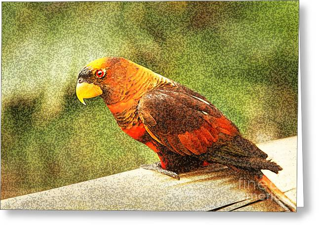 Rainbow Lorikeets Greeting Cards - Dusky Lory Greeting Card by Eden Baed