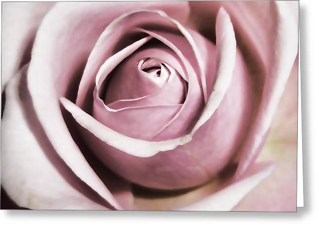 Pink Flower Prints Greeting Cards - Dusky Rose Greeting Card by Sharon Lisa Clarke