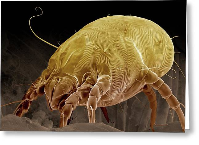 Dust Mite Greeting Card by Clouds Hill Imaging Ltd