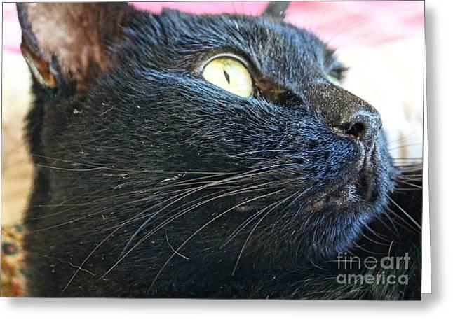 American Shorthair Greeting Cards - Dusty Black Cat Greeting Card by Kerri Mortenson