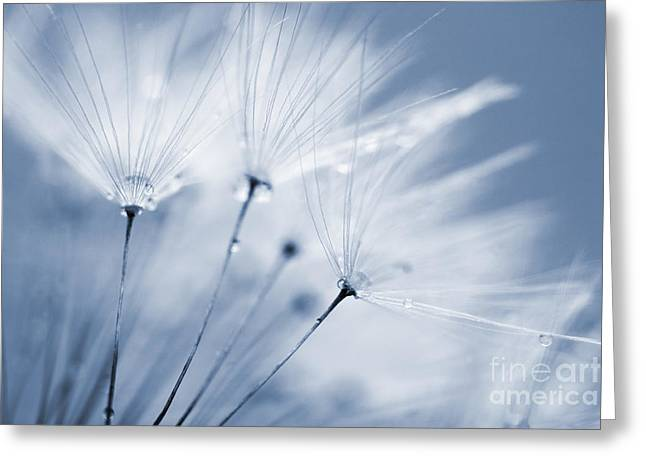 Dusty Blue Greeting Cards - Dusty Blue Dandelion Clock and Water Droplets Greeting Card by Natalie Kinnear