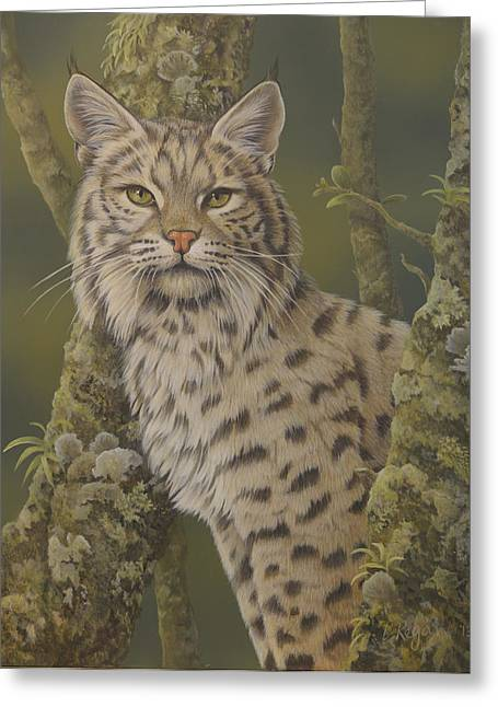 North American Bobcats Greeting Cards - Dusty Greeting Card by Laura Regan