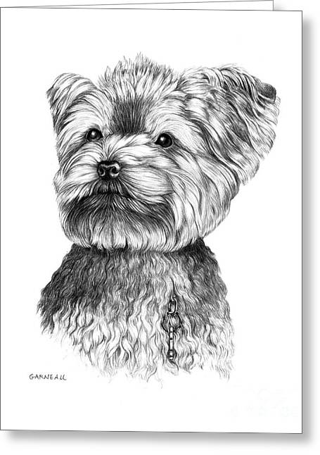 Toy Dogs Drawings Greeting Cards - Dutch Greeting Card by Catherine Garneau