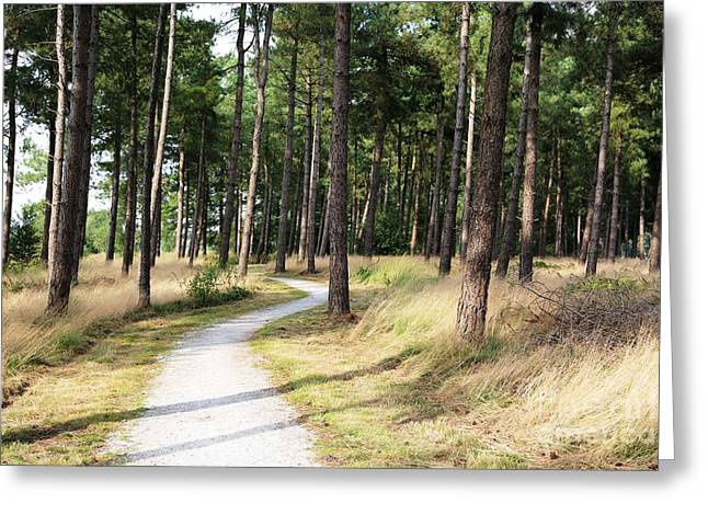 Dutch Country Bicycle Path Greeting Card by Carol Groenen
