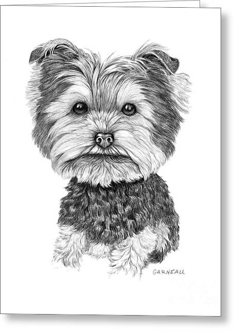 Toy Dog Drawings Greeting Cards - Dutchie Greeting Card by Catherine Garneau