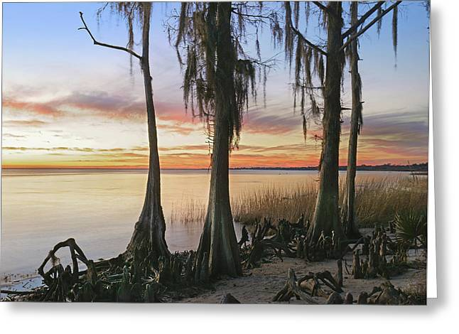 Dwarf Cypress Trees Covered Greeting Card by Tim Fitzharris