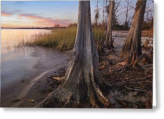 Dwarf Cypress Trees Lake Pontchartrain Greeting Card by Tim Fitzharris