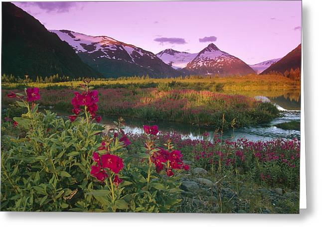 Dwarf Fireweed Portage Creek Bard Peak Greeting Card by Michael DeYoung
