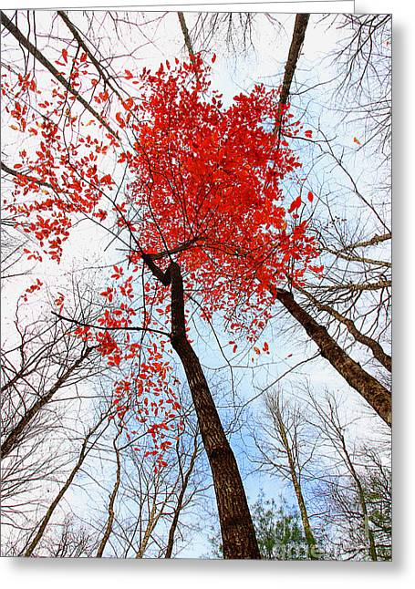 Colorful Trees Greeting Cards - Dwindling Flames Greeting Card by Michael Eingle