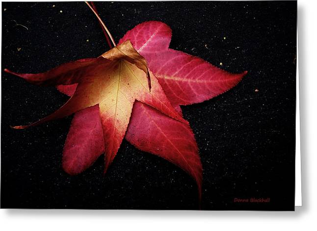 Red Leaves Greeting Cards - Dying For Love Greeting Card by Donna Blackhall