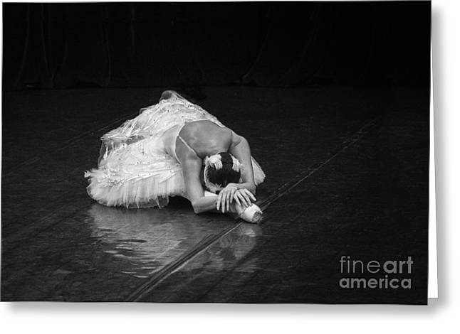 St. Clare Greeting Cards - Dying Swan 4. Greeting Card by Clare Bambers