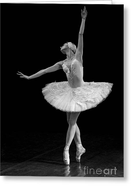 St. Clare Greeting Cards - Dying Swan 9. Greeting Card by Clare Bambers