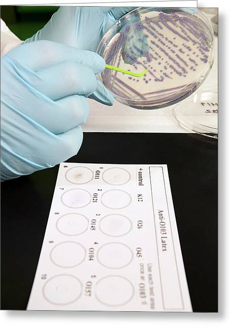 E. Coli Stec Bacterial Test Greeting Card by Peggy Greb/us Department Of Agriculture
