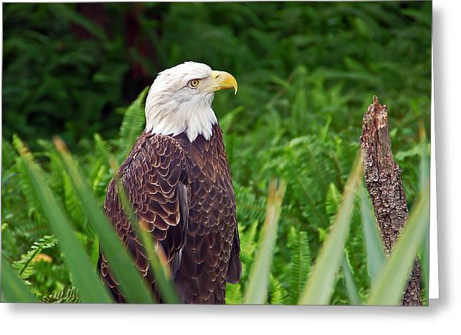 Eagle Greeting Card by Aimee L Maher Photography and Art Visit ALMGallerydotcom