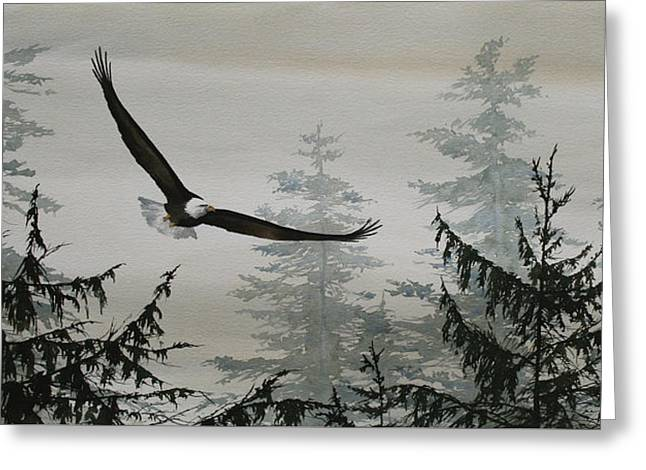 Eagle And Cedars Greeting Card by James Williamson