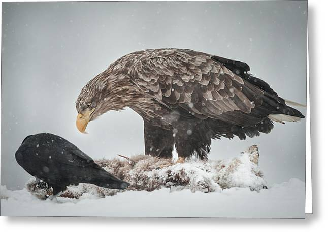 Scavenge Greeting Cards - Eagle and Raven Greeting Card by Andy Astbury