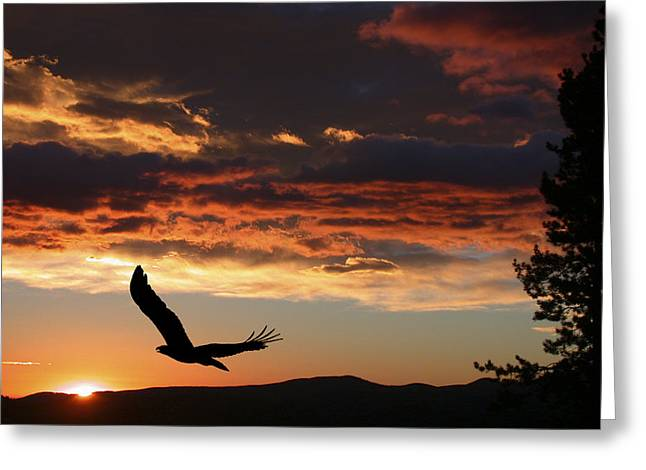 Eagle at Sunset Greeting Card by Shane Bechler