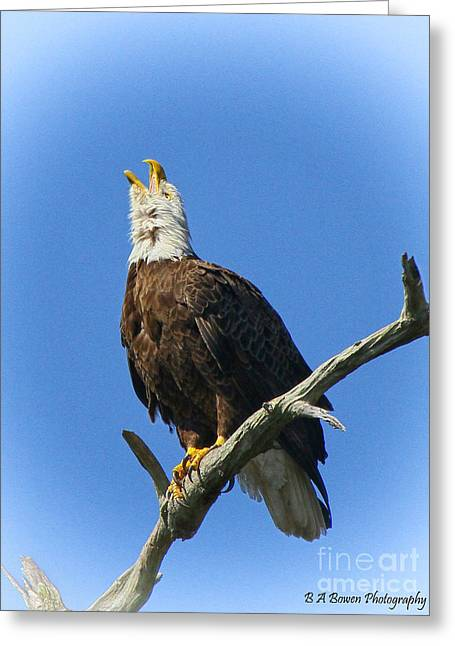Pasco County Greeting Cards - Eagle calling Greeting Card by Barbara Bowen