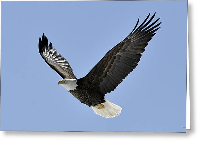 Rj Martens Greeting Cards - Eagle Class Greeting Card by RJ Martens
