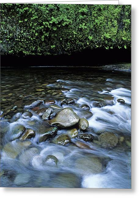 Eagle Creek Greeting Cards - Eagle Creek Greeting Card by Doug Davidson