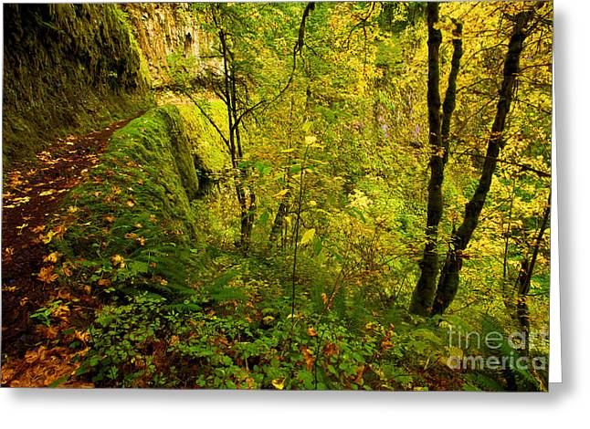 Eagle Creek Greeting Cards - Eagle Creek Fall Greeting Card by Adam Jewell
