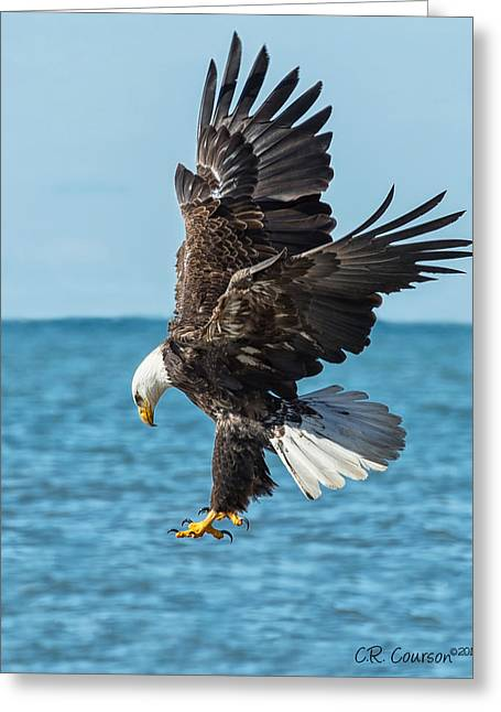 Courson Greeting Cards - Eagle Dive Greeting Card by CR  Courson