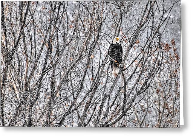 Eagles In Storms. Bald Eagles Greeting Cards - Eagle in Blizzard Greeting Card by Britt Runyon