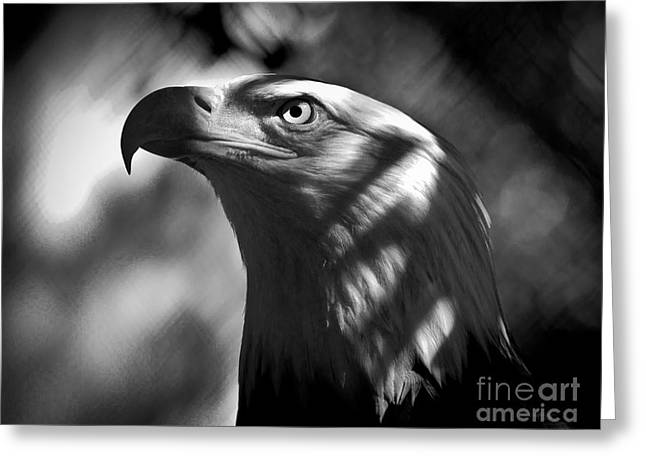 Eagle In Shadows Greeting Card by Robert Frederick