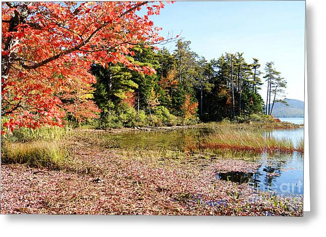 Maine Landscape Greeting Cards - Eagle Lake Autumn Greeting Card by David Birchall