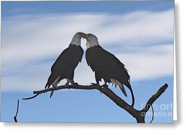 Artist Photographs Greeting Cards - Eagle Love Greeting Card by Bob Hislop