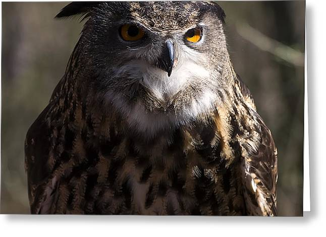 Owl Picture Greeting Cards - Eagle Owl 1 Greeting Card by Chris Flees
