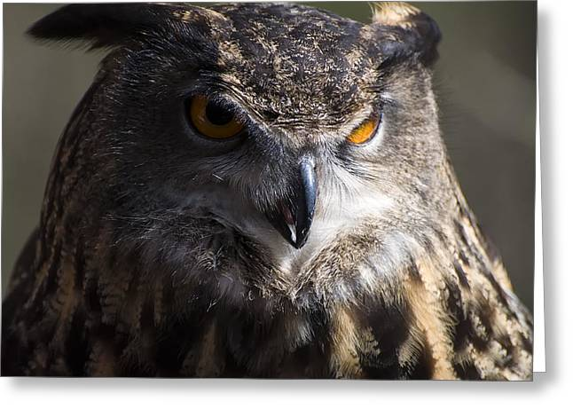 Owl Picture Greeting Cards - Eagle owl 2 Greeting Card by Chris Flees