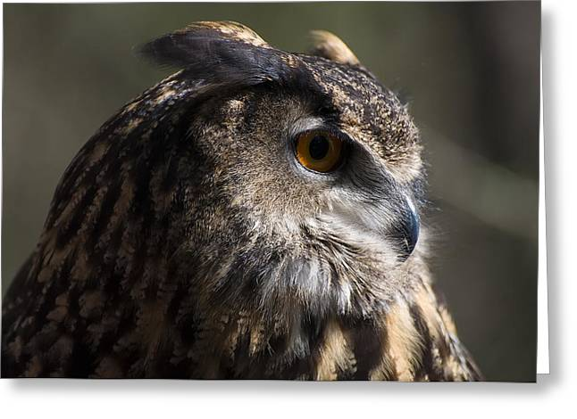 Owl Picture Greeting Cards - Eagle Owl 3 Greeting Card by Chris Flees