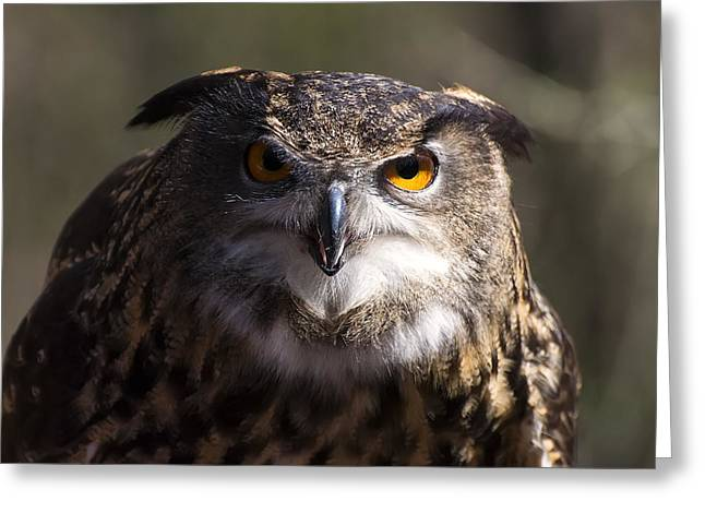 Owl Picture Greeting Cards - Eagle Owl 4 Greeting Card by Chris Flees
