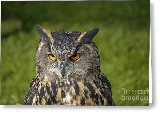 Eagle Owl Greeting Card by Clare Bambers