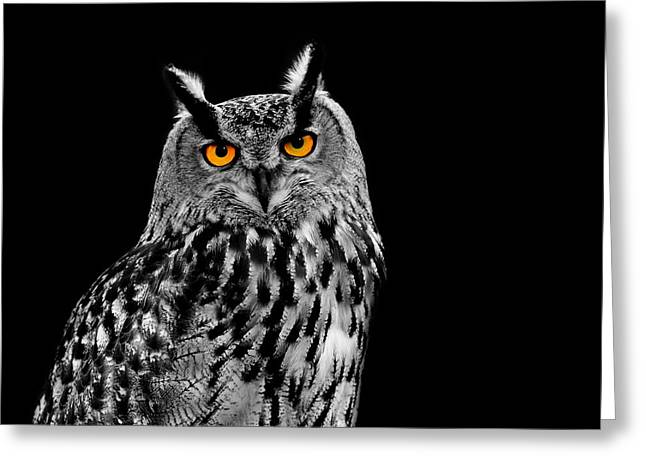 Eagle Owl Greeting Card by Mark Rogan