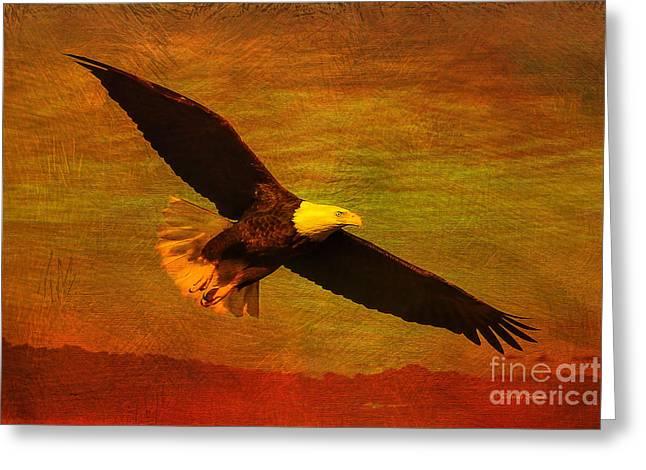 Hunting Bird Greeting Cards - Eagle Spirit Greeting Card by Deborah Benoit