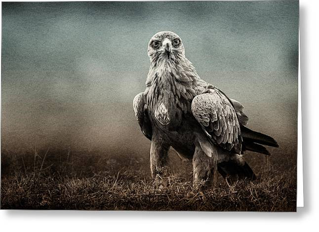 Surveying Greeting Cards - Eagle Stare Texture Blend Greeting Card by Mike Gaudaur